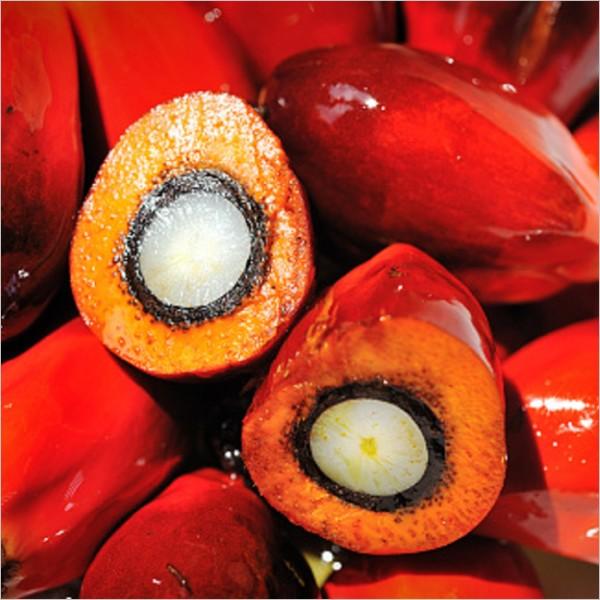 """""""L'oro rosso. La questione olio di palma"""". Conversazione con Helga Vincenti"""