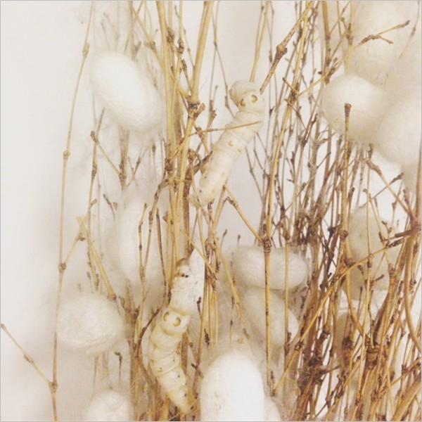 Laboratorio per bimbi aspiranti allevatori di bachi da seta