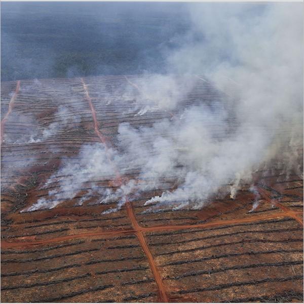 I prodotti di Mondelēz (Oreo e Ritz) hanno sapore di foresta distrutta!