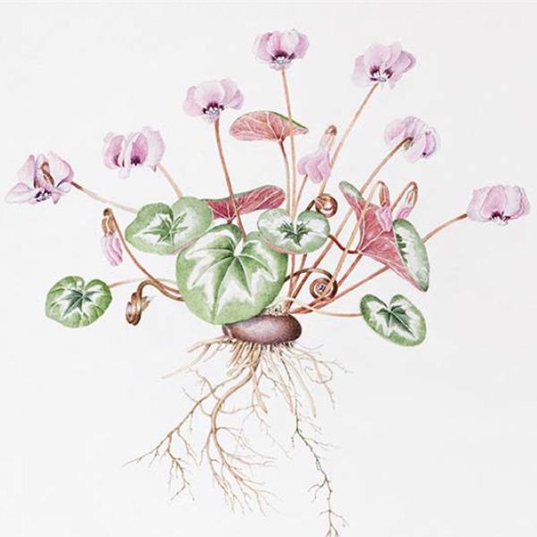 Corso di acquerello botanico per adulti e ragazzi