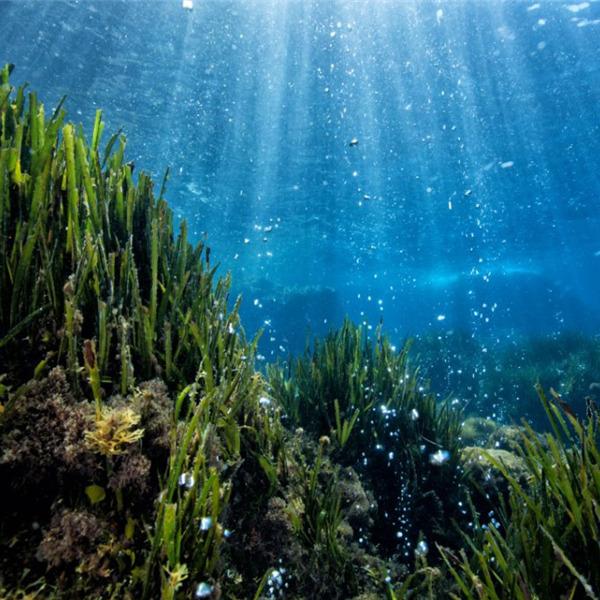 Un tuffo nel mare che cambia - Seminario pubblico su clima e mare