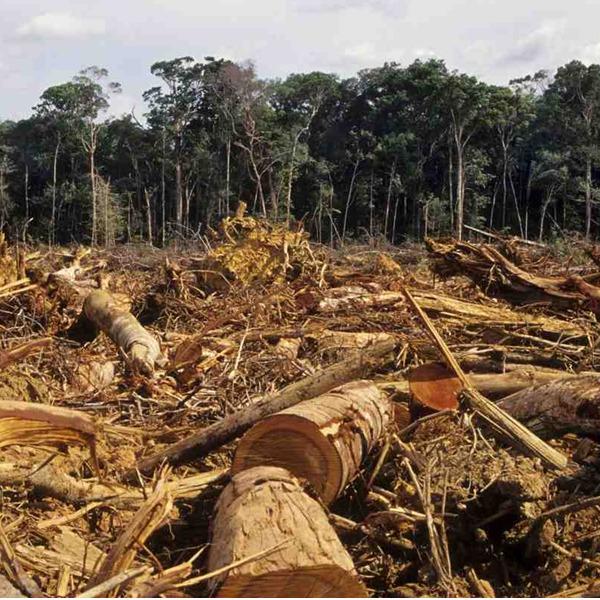 C'è un po' di Mad in Italy nella deforestazione dell'Amazzonia